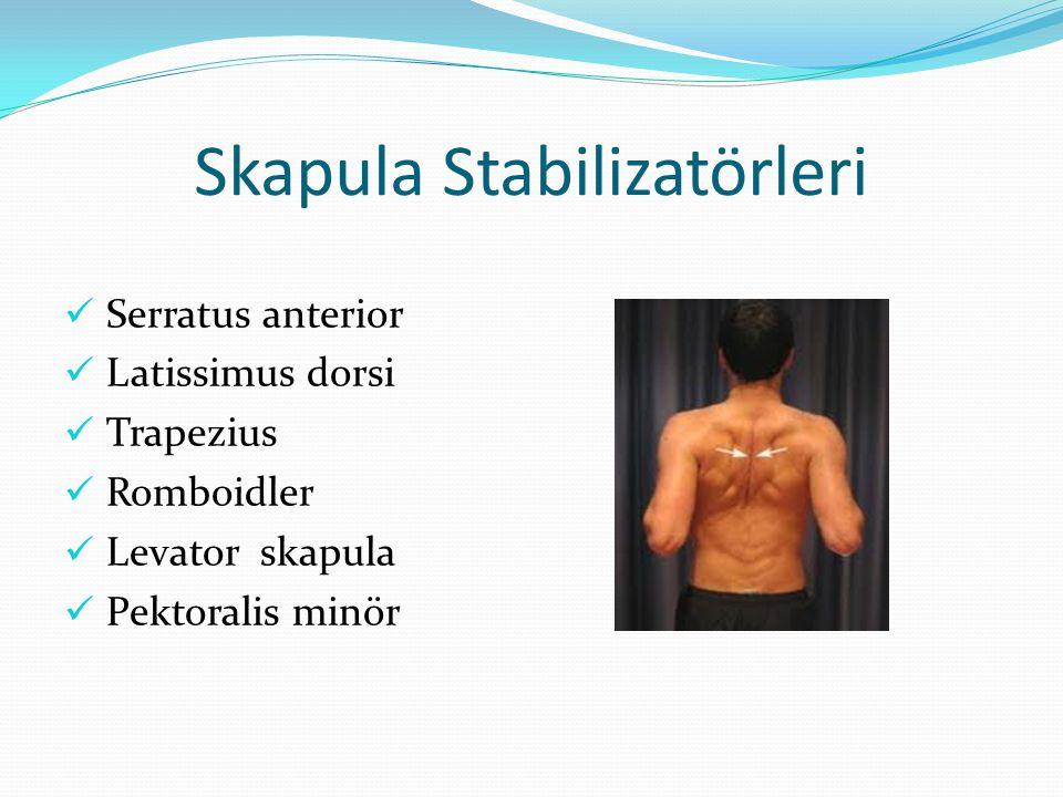 Skapula Stabilizatörleri