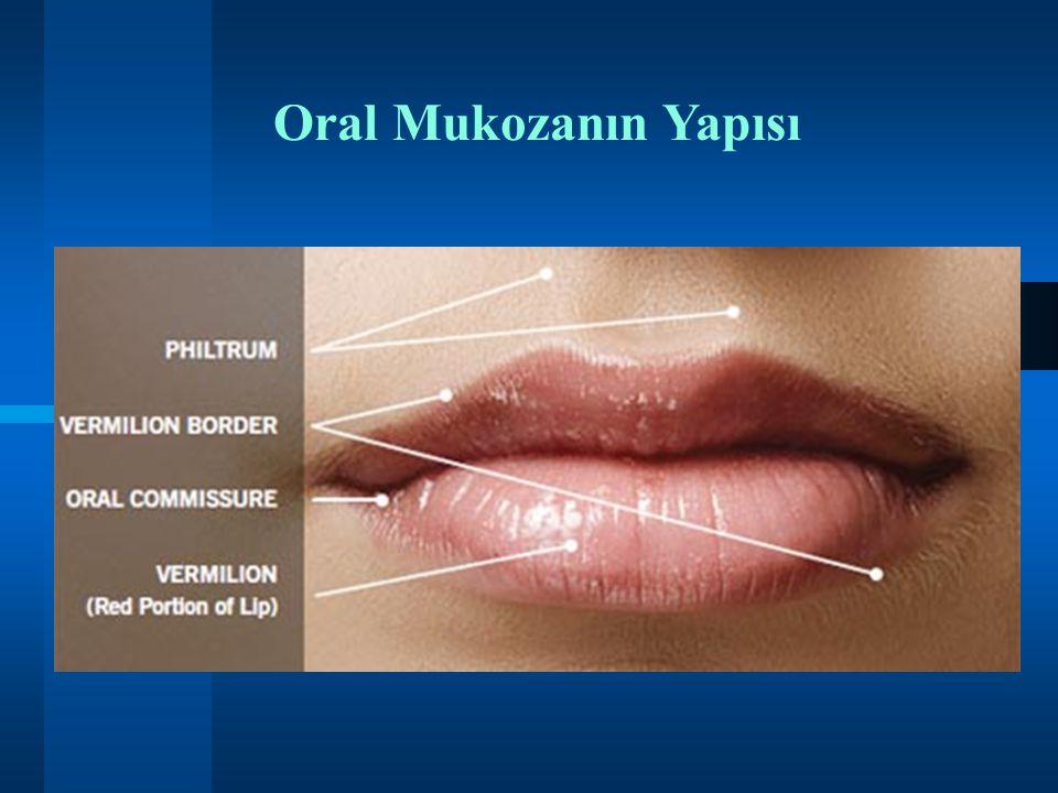 Oral Mukozanın Yapısı