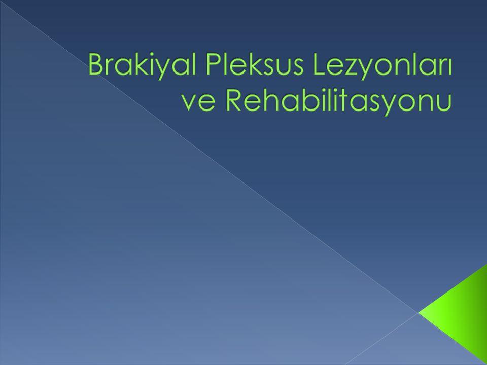 Brakiyal Pleksus Lezyonları ve Rehabilitasyonu