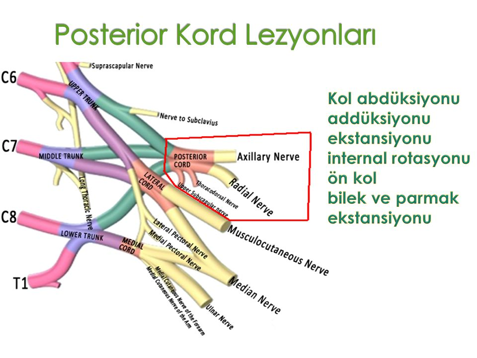 Posterior Kord Lezyonları