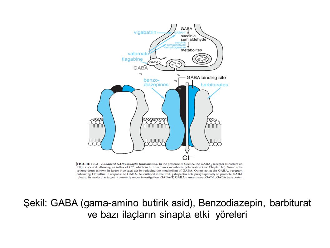 Şekil: GABA (gama-amino butirik asid), Benzodiazepin, barbiturat ve bazı ilaçların sinapta etki yöreleri