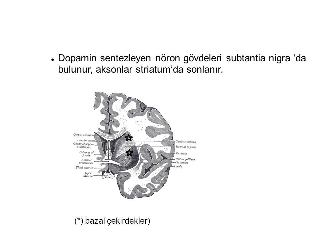 Dopamin sentezleyen nöron gövdeleri subtantia nigra 'da bulunur, aksonlar striatum'da sonlanır.