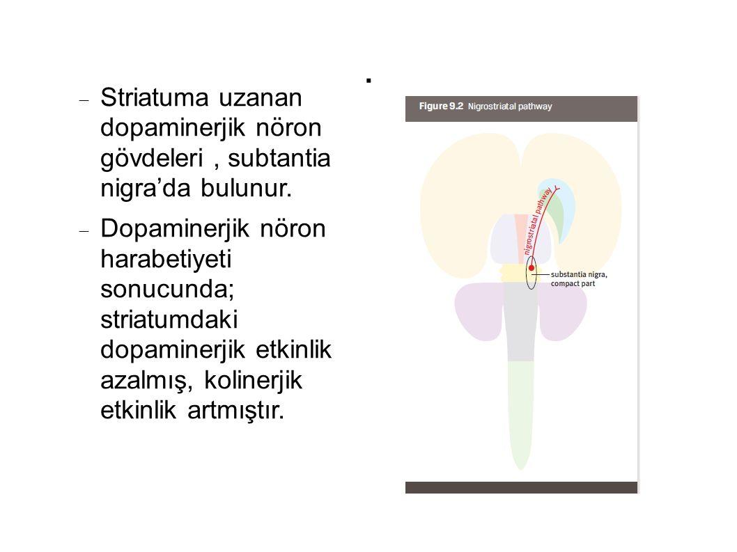 . Striatuma uzanan dopaminerjik nöron gövdeleri , subtantia nigra'da bulunur.