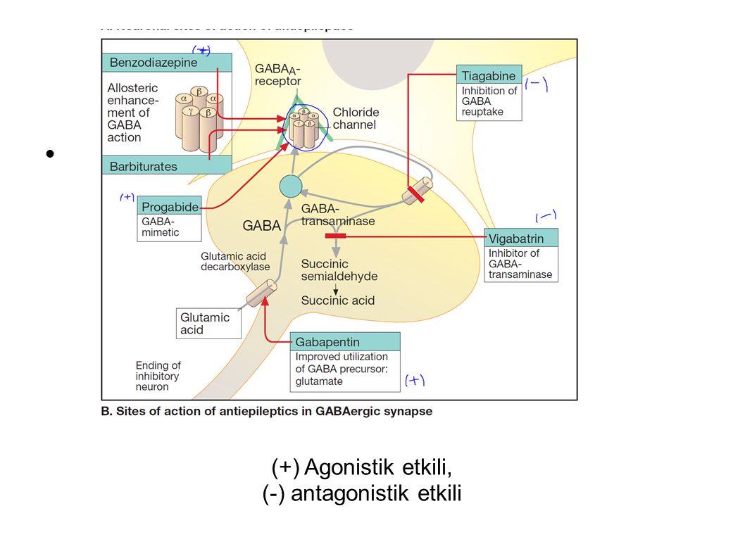 (+) Agonistik etkili, (-) antagonistik etkili