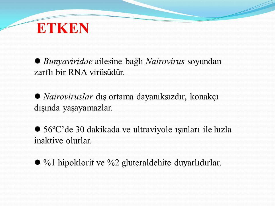 ETKEN Bunyaviridae ailesine bağlı Nairovirus soyundan zarflı bir RNA virüsüdür.