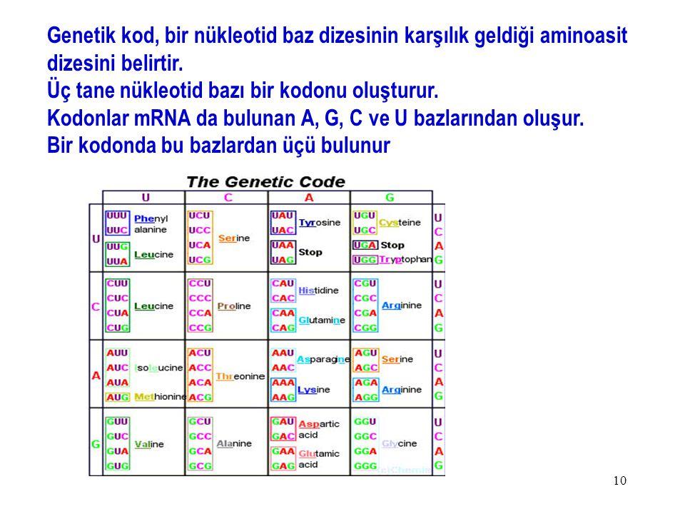 Genetik kod, bir nükleotid baz dizesinin karşılık geldiği aminoasit dizesini belirtir.