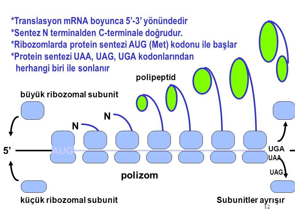 *Translasyon mRNA boyunca 5'-3' yönündedir