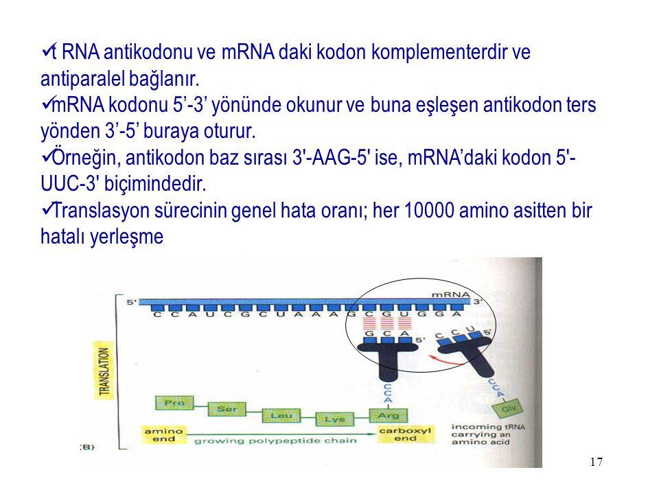 t RNA antikodonu ve mRNA daki kodon komplementerdir ve antiparalel bağlanır.