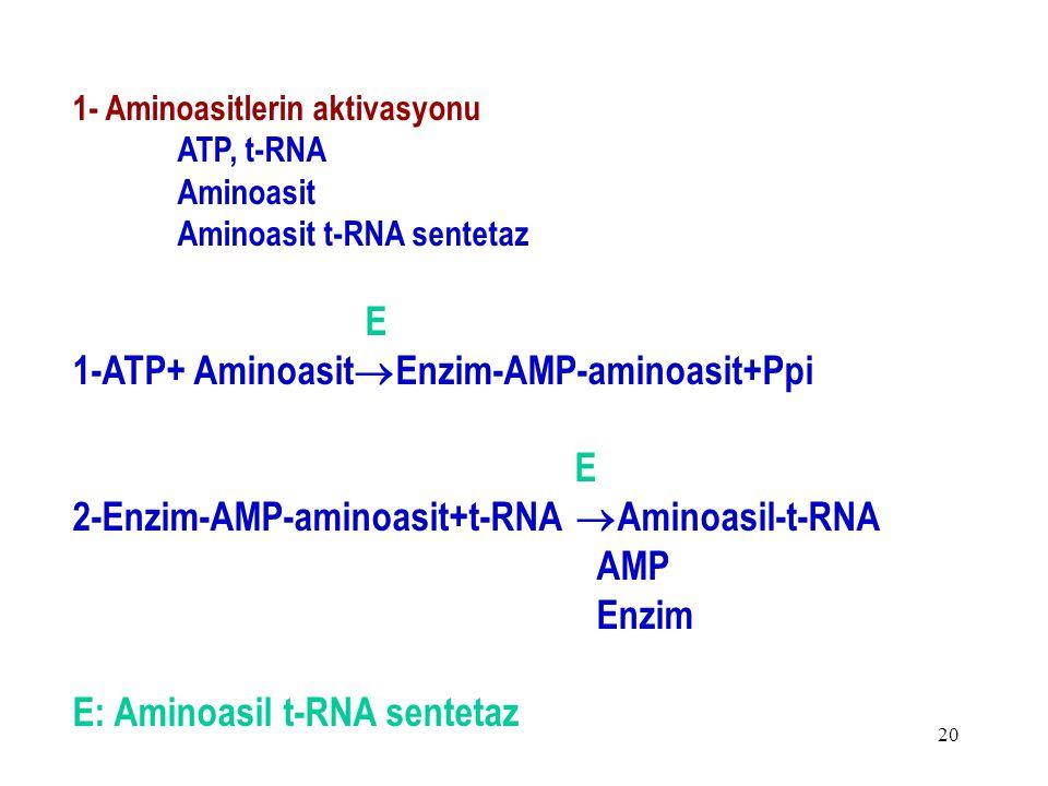 1-ATP+ AminoasitEnzim-AMP-aminoasit+Ppi
