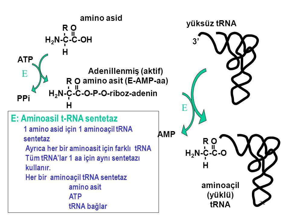 E: Aminoasil t-RNA sentetaz