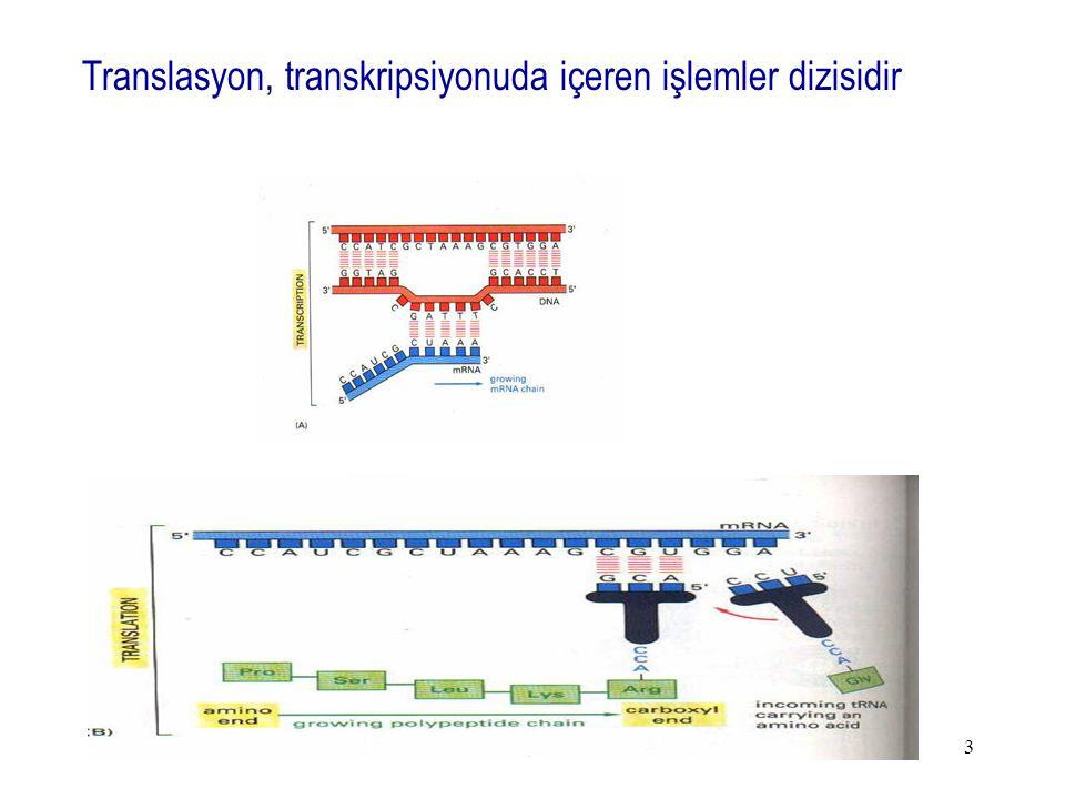 Translasyon, transkripsiyonuda içeren işlemler dizisidir