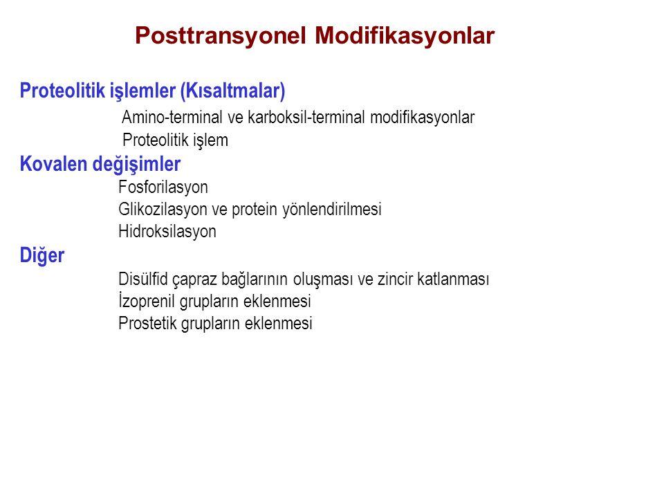 Posttransyonel Modifikasyonlar