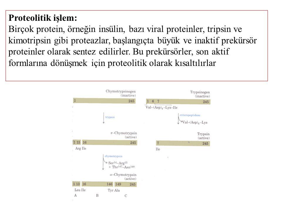 Proteolitik işlem: