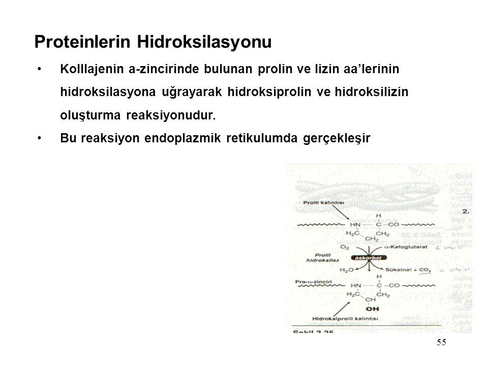 Proteinlerin Hidroksilasyonu