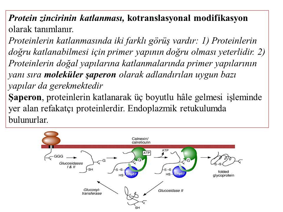 Protein zincirinin katlanması, kotranslasyonal modifikasyon olarak tanımlanır.