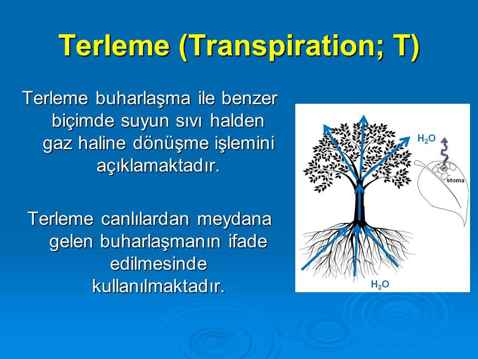 Terleme (Transpiration; T)