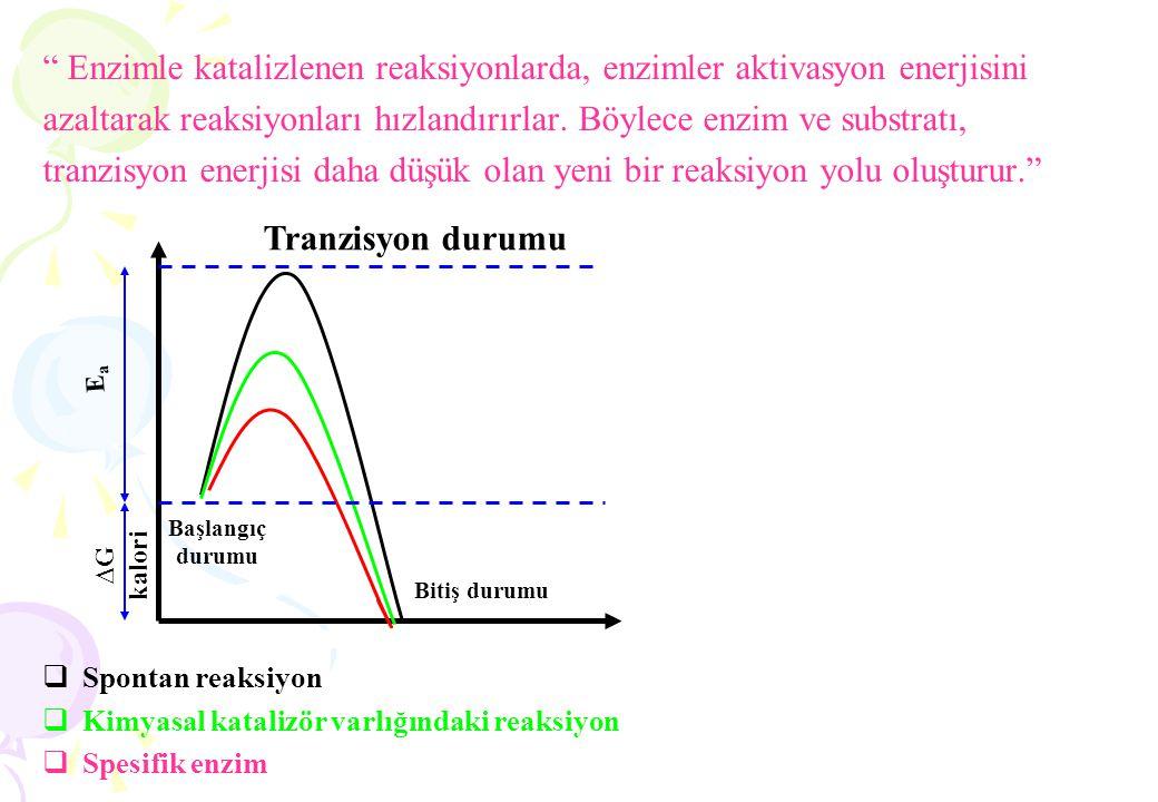 1. Reaksiyonlar ve bu reaksiyonları katalizleyen enzimler, reaksiyon