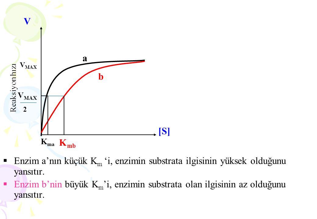 Metal iyonları substrat bağlanmasını ve katalizi kolaylaştırır.