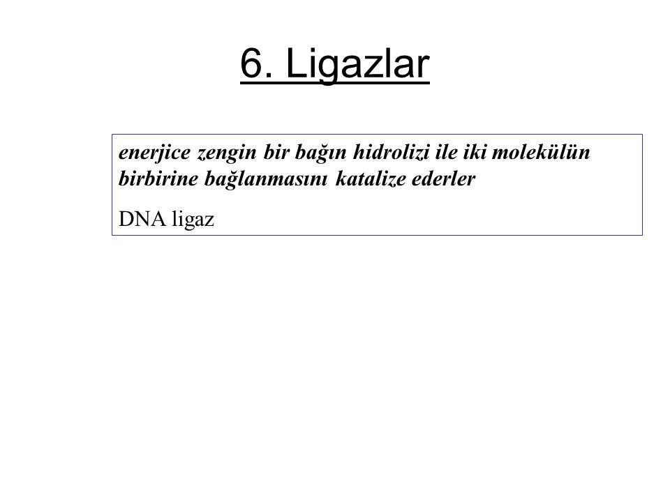 6. Ligazlar enerjice zengin bir bağın hidrolizi ile iki molekülün birbirine bağlanmasını katalize ederler.