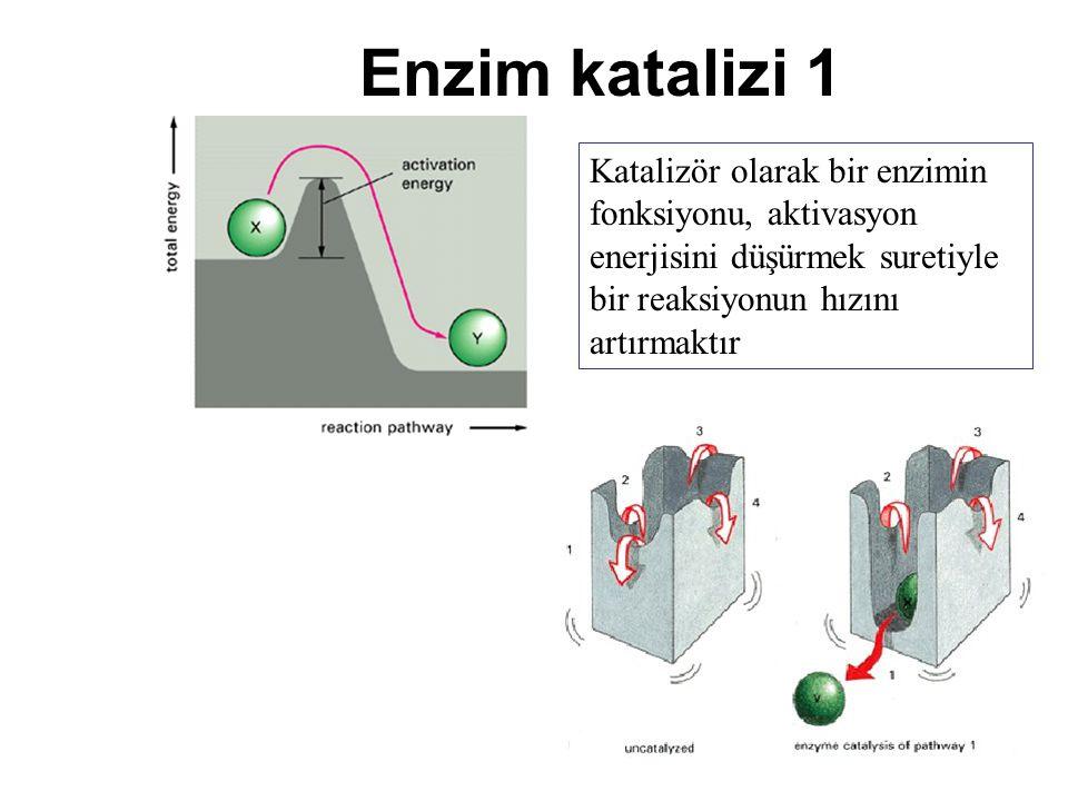 Enzim katalizi 1 Katalizör olarak bir enzimin fonksiyonu, aktivasyon enerjisini düşürmek suretiyle bir reaksiyonun hızını artırmaktır.