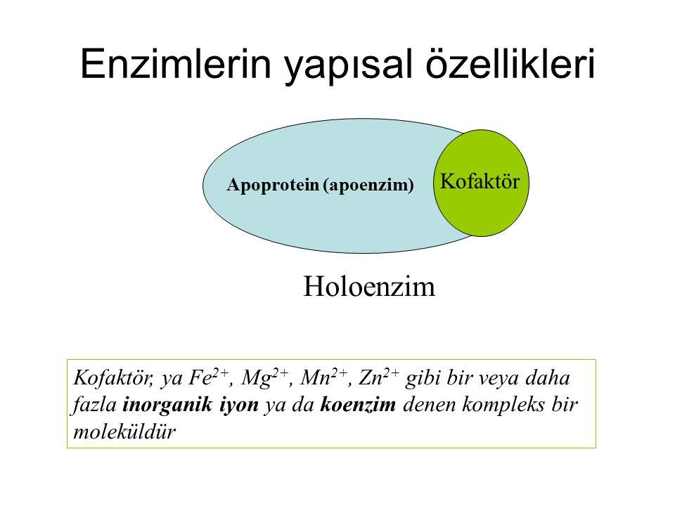 Enzimlerin yapısal özellikleri