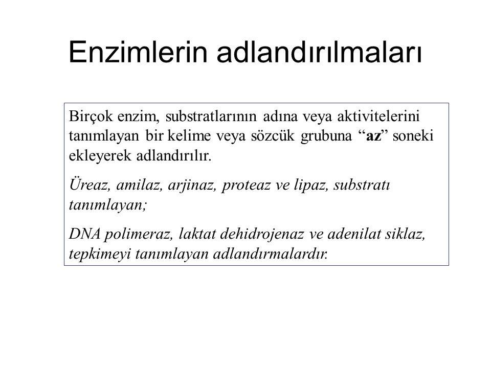 Enzimlerin adlandırılmaları