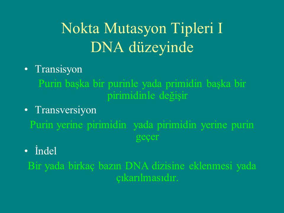 Nokta Mutasyon Tipleri I DNA düzeyinde