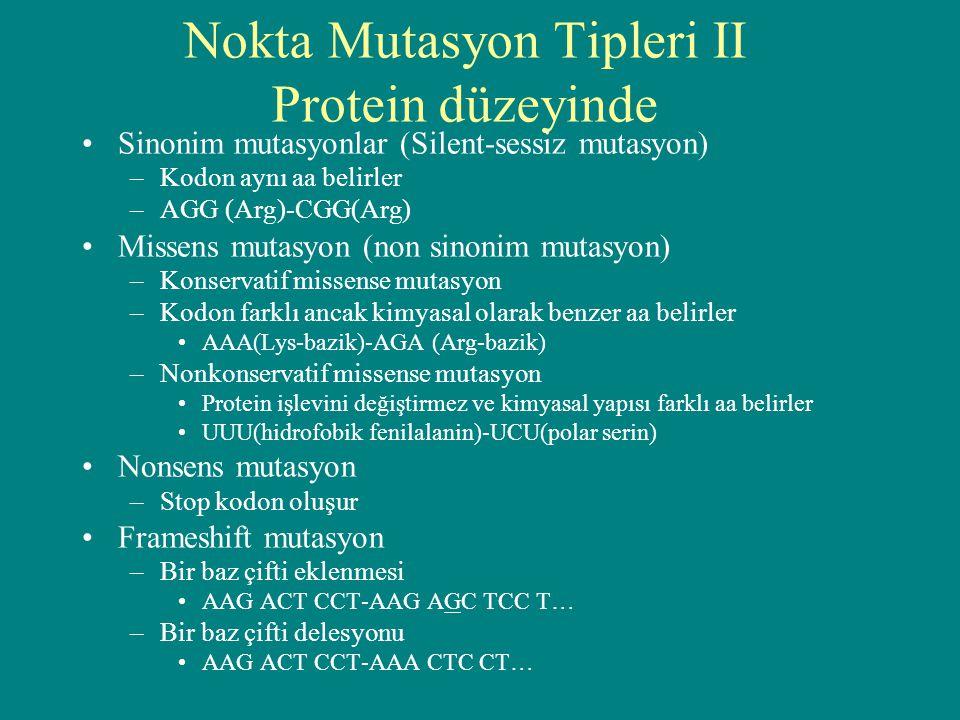 Nokta Mutasyon Tipleri II Protein düzeyinde