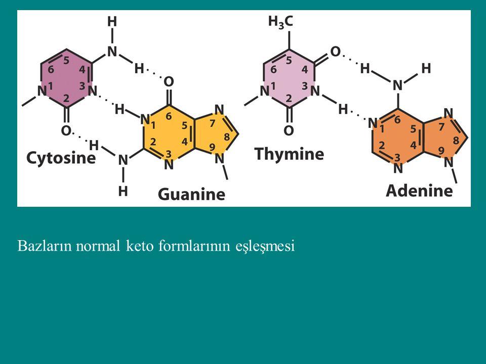 Bazların normal keto formlarının eşleşmesi