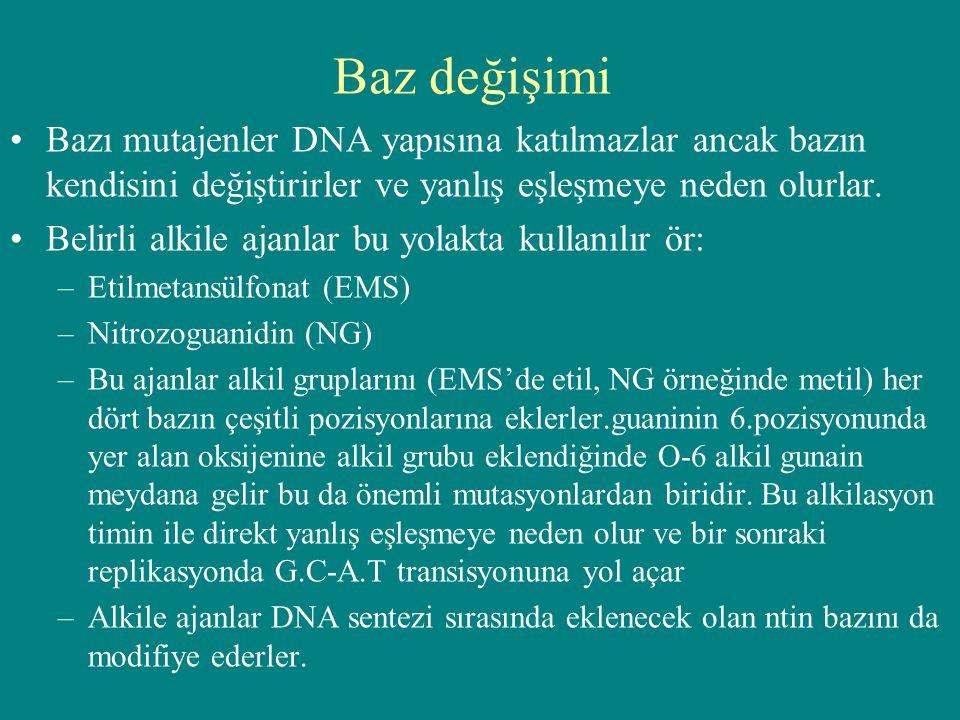 Baz değişimi Bazı mutajenler DNA yapısına katılmazlar ancak bazın kendisini değiştirirler ve yanlış eşleşmeye neden olurlar.