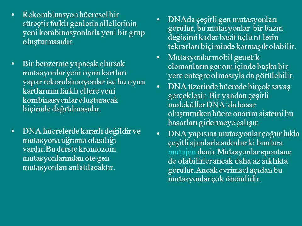 Rekombinasyon hücresel bir süreçtir farklı genlerin allellerinin yeni kombinasyonlarla yeni bir grup oluşturmasıdır.