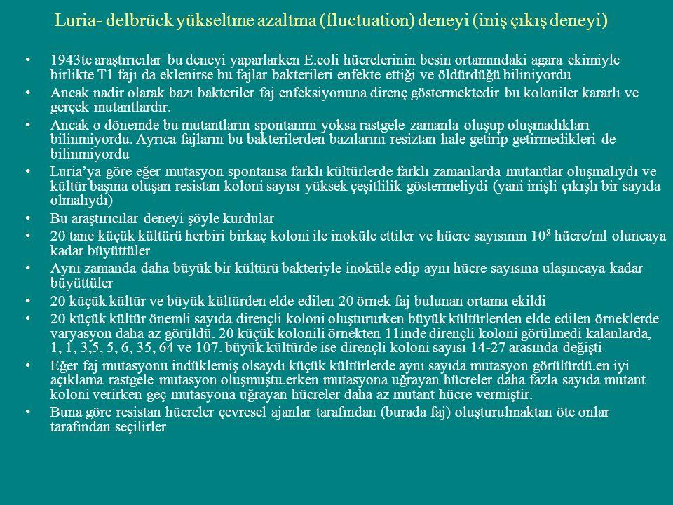 Luria- delbrück yükseltme azaltma (fluctuation) deneyi (iniş çıkış deneyi)