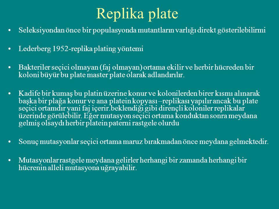 Replika plate Seleksiyondan önce bir populasyonda mutantların varlığı direkt gösterilebilirmi. Lederberg 1952-replika plating yöntemi.
