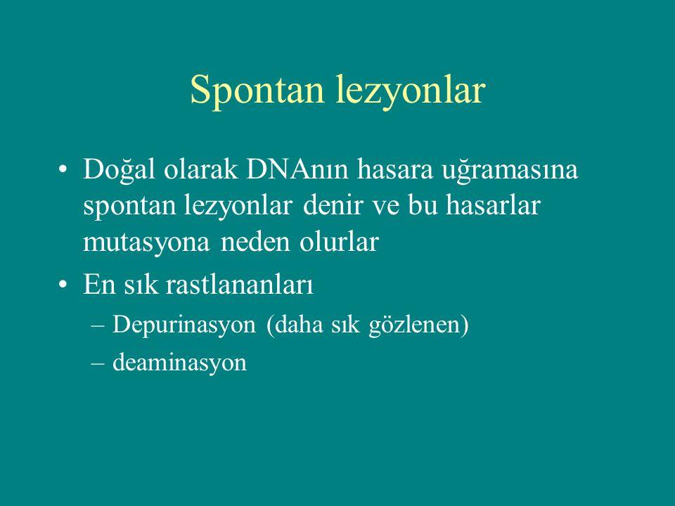 Spontan lezyonlar Doğal olarak DNAnın hasara uğramasına spontan lezyonlar denir ve bu hasarlar mutasyona neden olurlar.