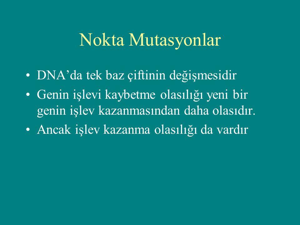 Nokta Mutasyonlar DNA'da tek baz çiftinin değişmesidir
