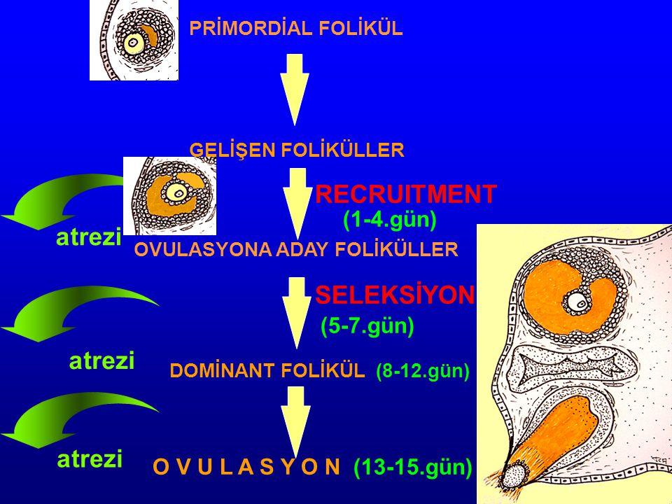 RECRUITMENT atrezi SELEKSİYON atrezi atrezi (1-4.gün) (5-7.gün)