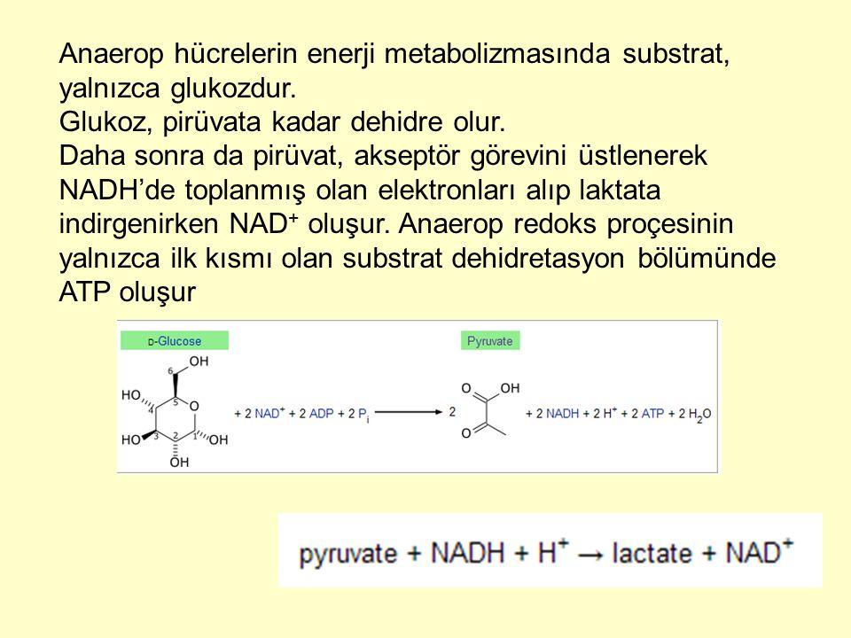 Anaerop hücrelerin enerji metabolizmasında substrat, yalnızca glukozdur.