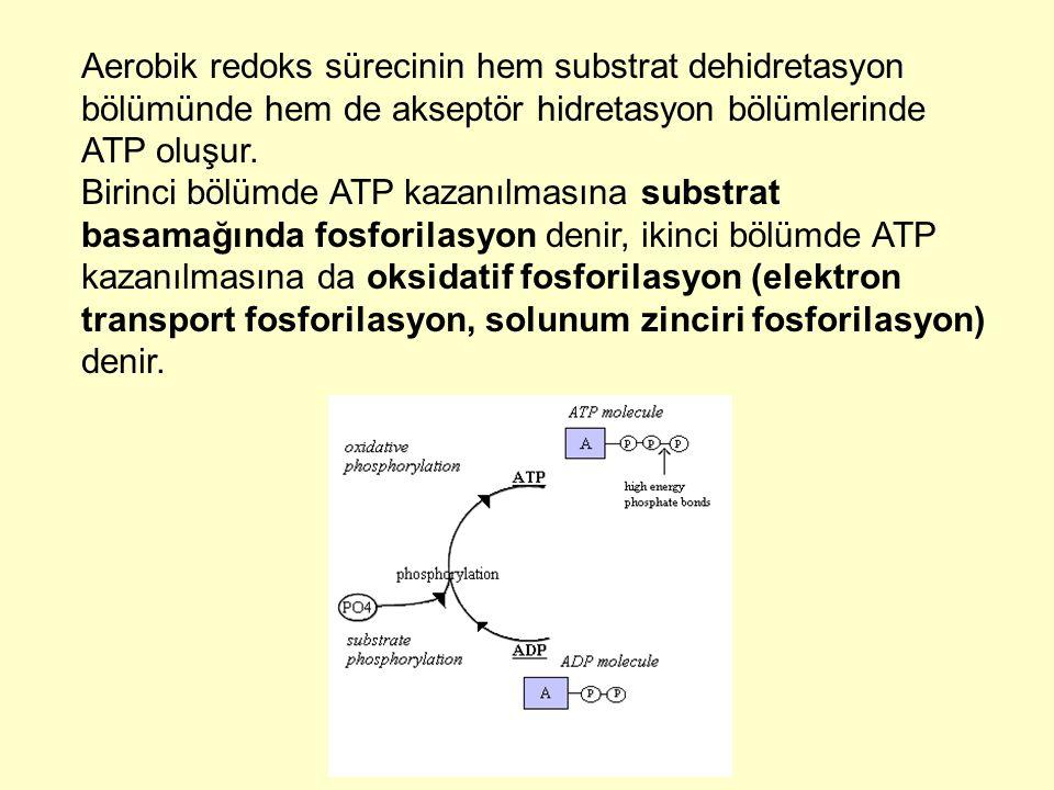 Aerobik redoks sürecinin hem substrat dehidretasyon bölümünde hem de akseptör hidretasyon bölümlerinde ATP oluşur.