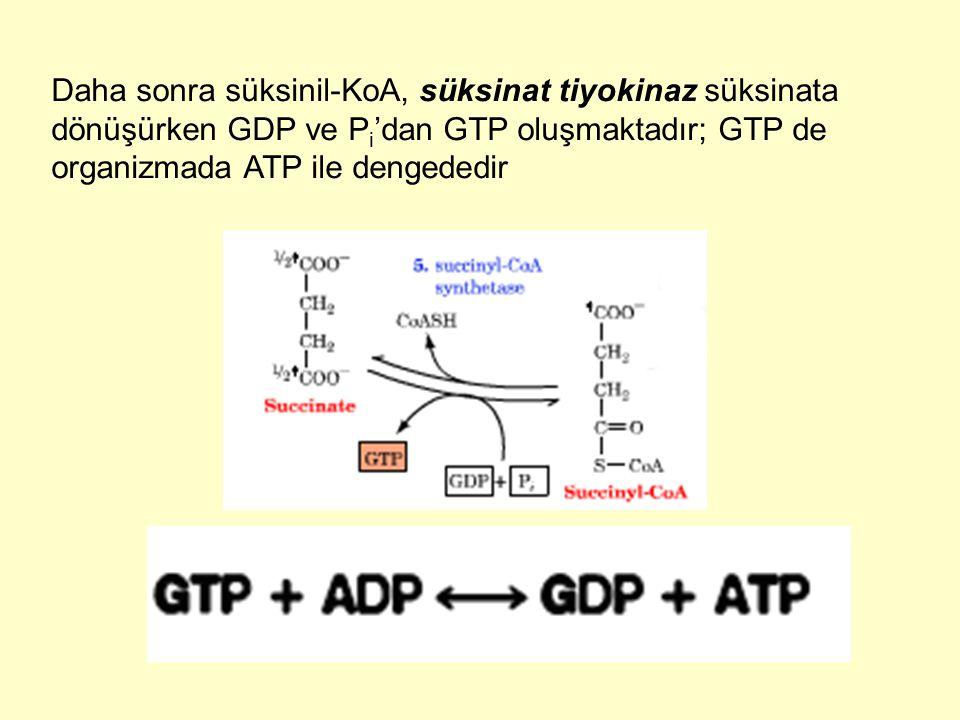 Daha sonra süksinil-KoA, süksinat tiyokinaz süksinata dönüşürken GDP ve Pi'dan GTP oluşmaktadır; GTP de organizmada ATP ile dengededir