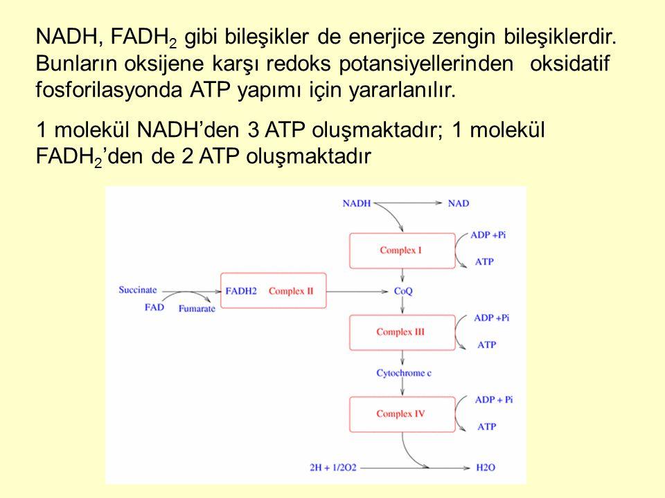 NADH, FADH2 gibi bileşikler de enerjice zengin bileşiklerdir