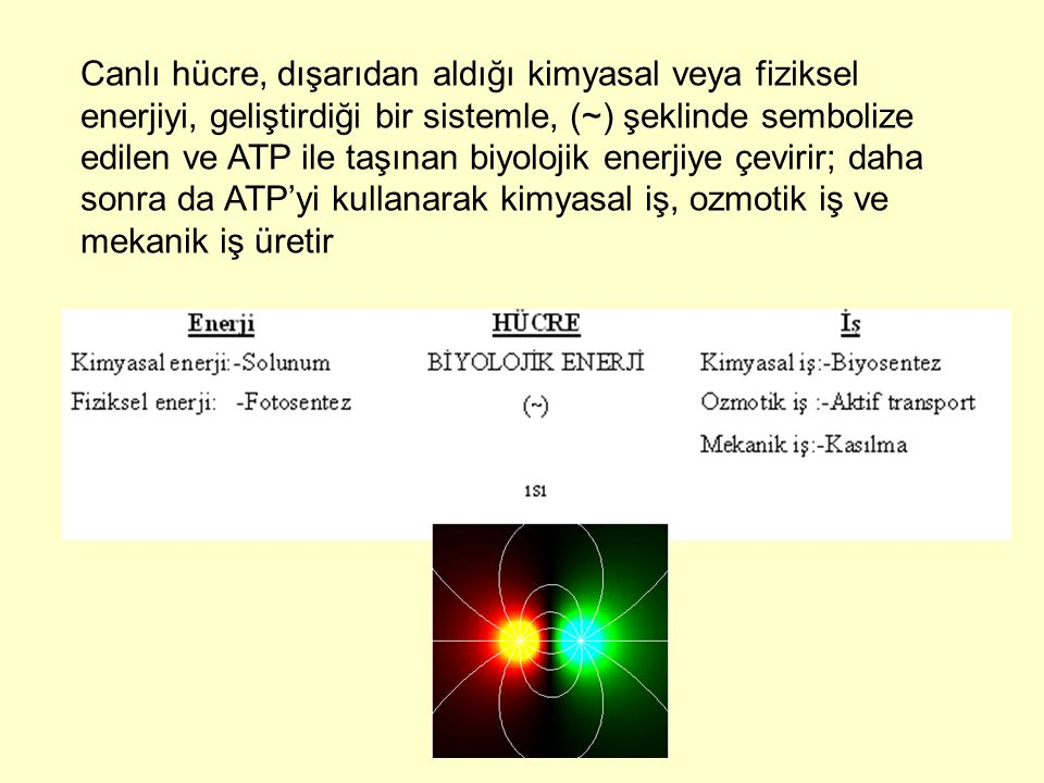 Canlı hücre, dışarıdan aldığı kimyasal veya fiziksel enerjiyi, geliştirdiği bir sistemle, (~) şeklinde sembolize edilen ve ATP ile taşınan biyolojik enerjiye çevirir; daha sonra da ATP'yi kullanarak kimyasal iş, ozmotik iş ve mekanik iş üretir