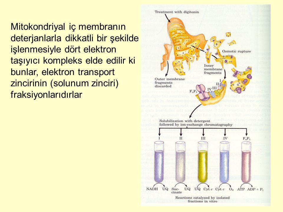 Mitokondriyal iç membranın deterjanlarla dikkatli bir şekilde işlenmesiyle dört elektron taşıyıcı kompleks elde edilir ki bunlar, elektron transport zincirinin (solunum zinciri) fraksiyonlarıdırlar