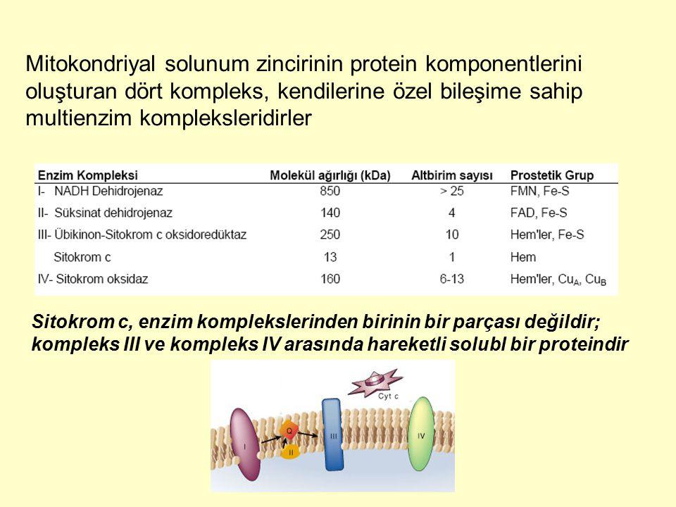 Mitokondriyal solunum zincirinin protein komponentlerini oluşturan dört kompleks, kendilerine özel bileşime sahip multienzim kompleksleridirler