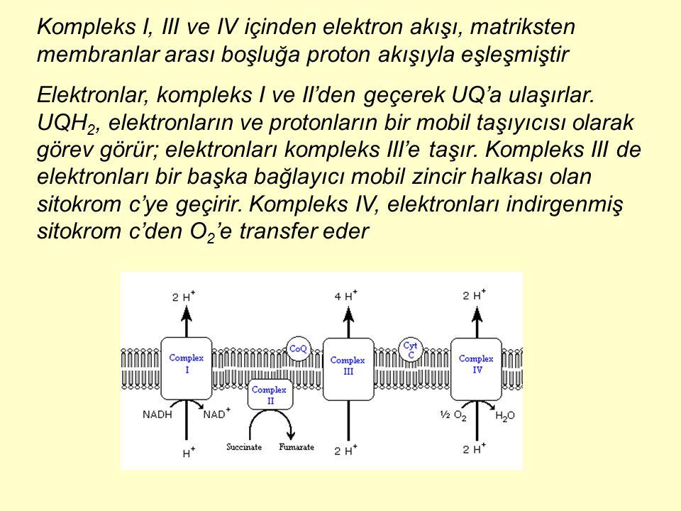 Kompleks I, III ve IV içinden elektron akışı, matriksten membranlar arası boşluğa proton akışıyla eşleşmiştir