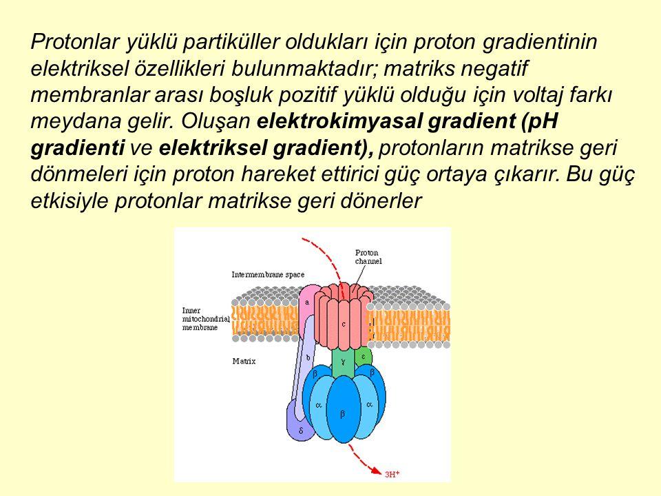 Protonlar yüklü partiküller oldukları için proton gradientinin elektriksel özellikleri bulunmaktadır; matriks negatif membranlar arası boşluk pozitif yüklü olduğu için voltaj farkı meydana gelir.