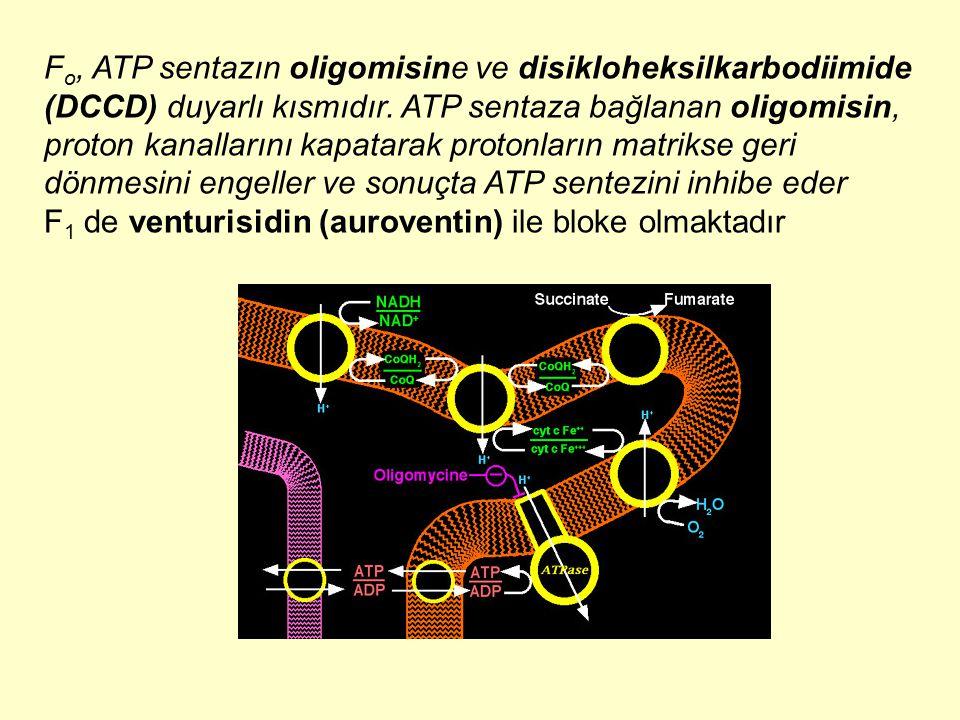Fo, ATP sentazın oligomisine ve disikloheksilkarbodiimide (DCCD) duyarlı kısmıdır. ATP sentaza bağlanan oligomisin, proton kanallarını kapatarak protonların matrikse geri dönmesini engeller ve sonuçta ATP sentezini inhibe eder