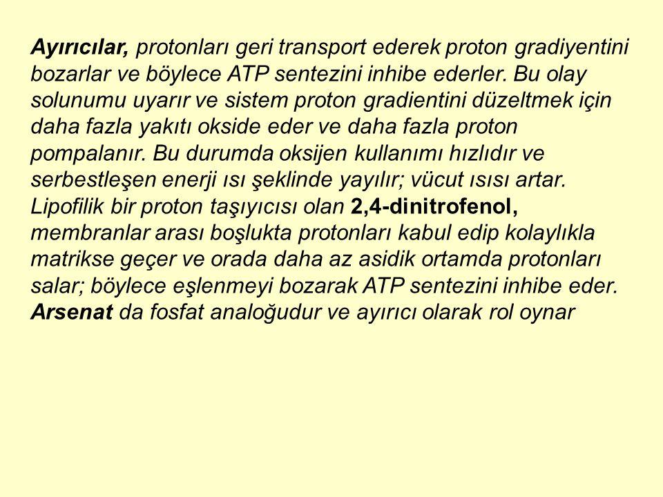 Ayırıcılar, protonları geri transport ederek proton gradiyentini bozarlar ve böylece ATP sentezini inhibe ederler. Bu olay solunumu uyarır ve sistem proton gradientini düzeltmek için daha fazla yakıtı okside eder ve daha fazla proton pompalanır. Bu durumda oksijen kullanımı hızlıdır ve serbestleşen enerji ısı şeklinde yayılır; vücut ısısı artar. Lipofilik bir proton taşıyıcısı olan 2,4-dinitrofenol, membranlar arası boşlukta protonları kabul edip kolaylıkla matrikse geçer ve orada daha az asidik ortamda protonları salar; böylece eşlenmeyi bozarak ATP sentezini inhibe eder.