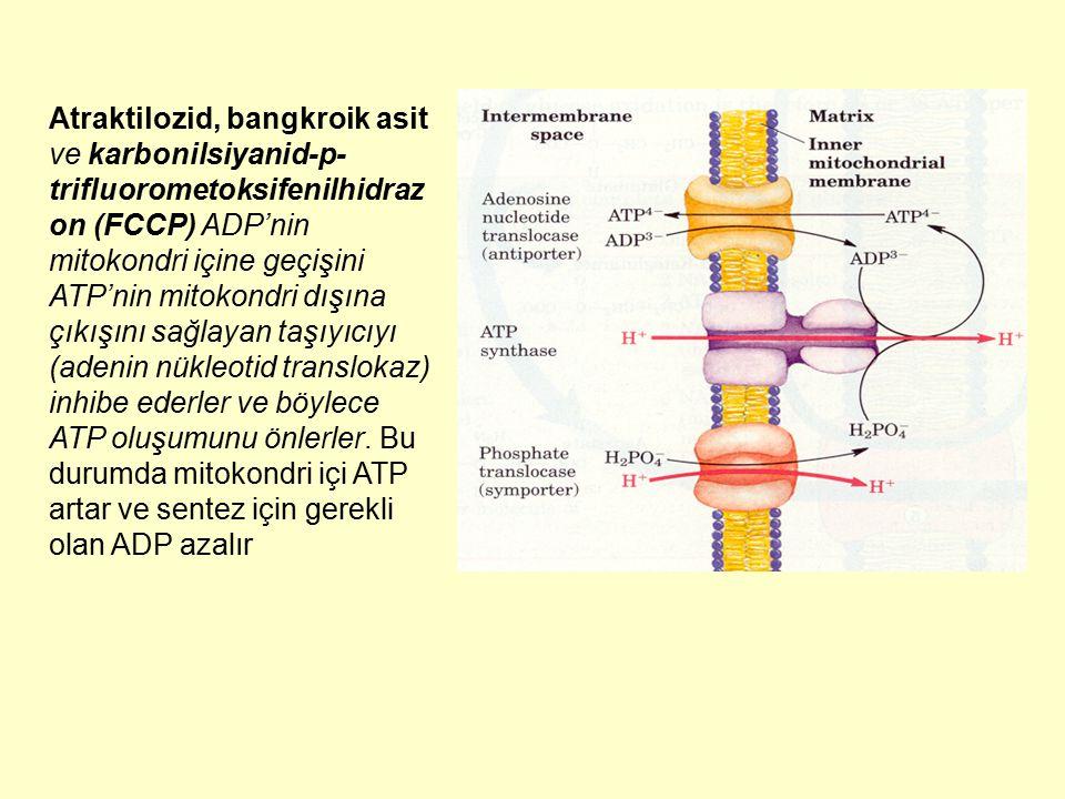 Atraktilozid, bangkroik asit ve karbonilsiyanid-p-trifluorometoksifenilhidrazon (FCCP) ADP'nin mitokondri içine geçişini ATP'nin mitokondri dışına çıkışını sağlayan taşıyıcıyı (adenin nükleotid translokaz) inhibe ederler ve böylece ATP oluşumunu önlerler.