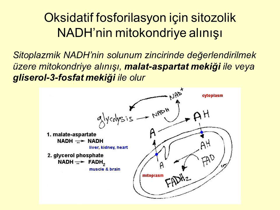 Oksidatif fosforilasyon için sitozolik NADH'nin mitokondriye alınışı