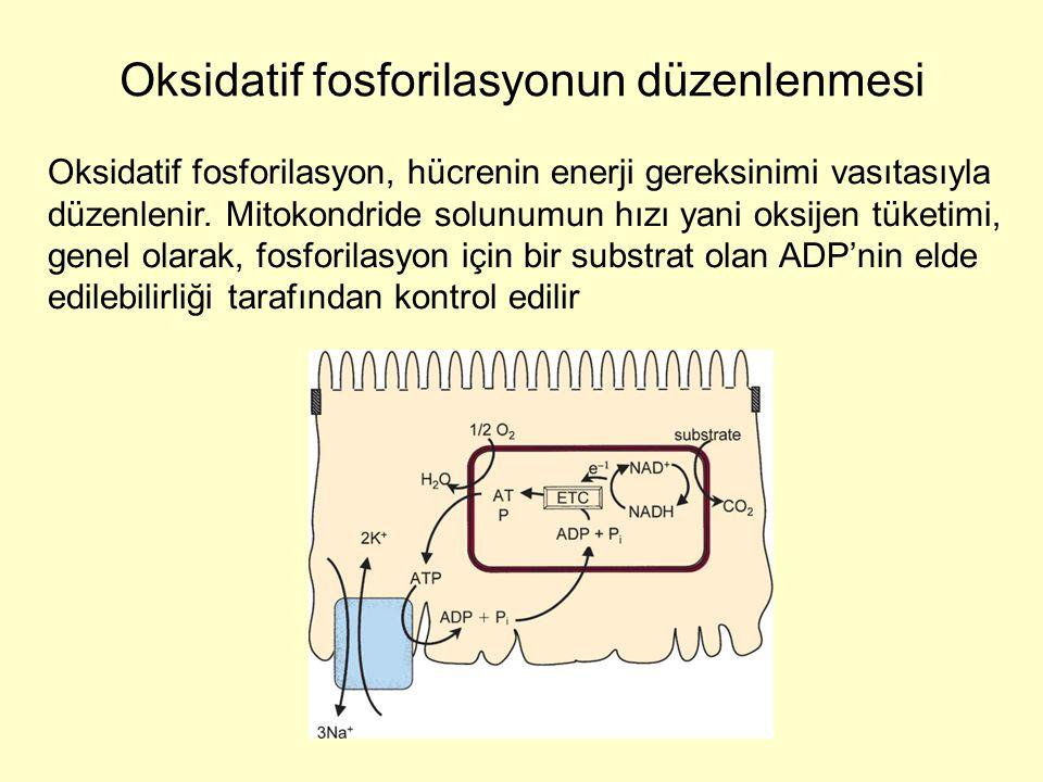 Oksidatif fosforilasyonun düzenlenmesi
